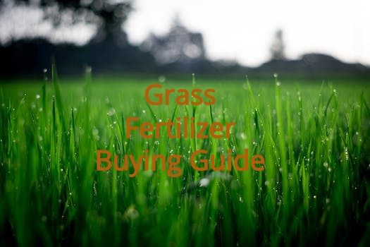Best Lawn Fertilizer for Grass | 2019 Buying Guide