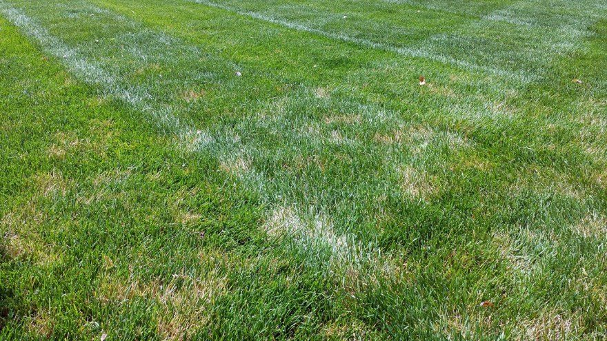 How to control Dollar Spot